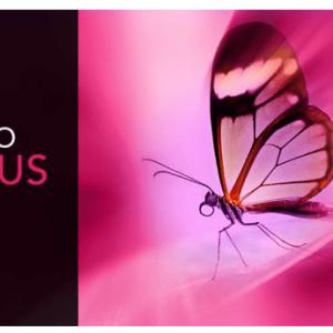 InPixio Photo Focus Pro Crack With License Key 2021